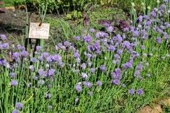 jardin_cordeliers (6)