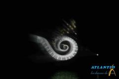 SPECTACLE-EAU-WEB-05